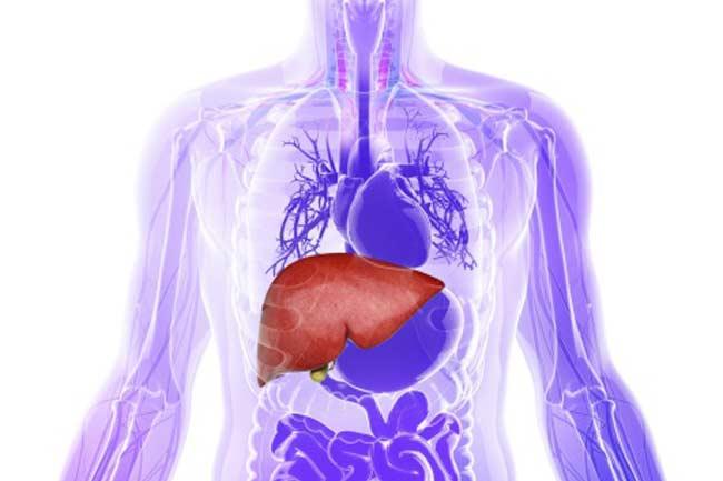 As a Liver Tonic
