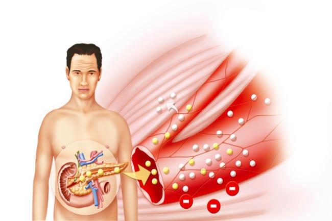 पाचन और पोषण में लाभदायक हैं बैक्टीरिया