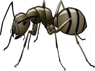 चींटी काटने पर करें ये घरेलू उपचार