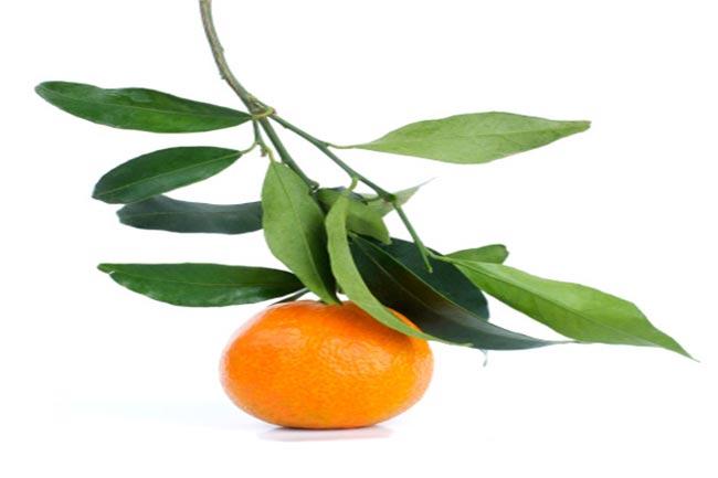 संतरे की डंठल