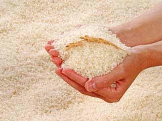Hazardous Contaminants Found in Rice