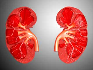 Habits That Destroy Your Kidneys