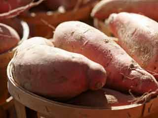 Leaves of Sweet Potato Rich Source of Essential Vitamins