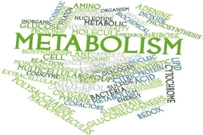 मेटाबोलिज़्म पर भी निर्भर होता है कैलोरी बर्न