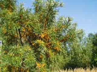 हर मर्ज की दवा हैं ये 8 औषधीय पेड़