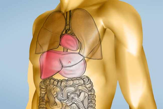 लिवर व किडनी संबंधी रोगियों को नुकसान