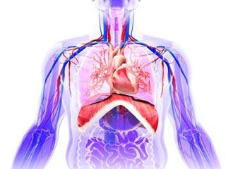 रक्त संचार को प्रभावित करने वाले कारण और इलाज