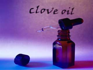 सेहत के लिए कितना फायदेमंद है लौंग का तेल