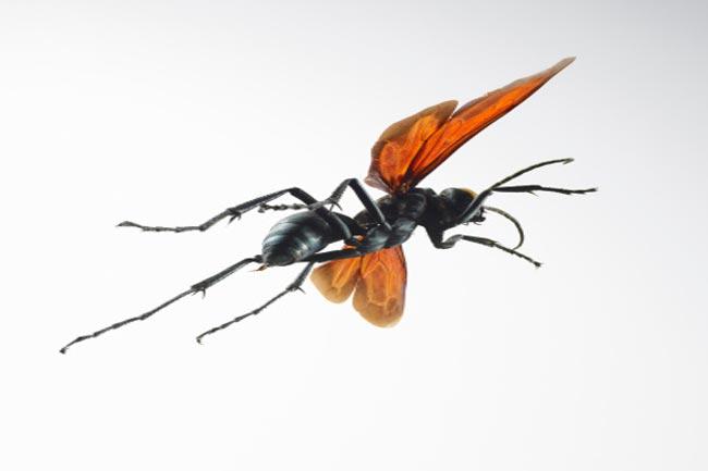 मलेरिया से बचाव