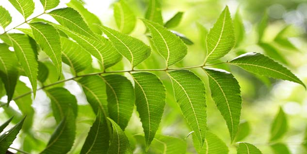 benefits of neem leaves