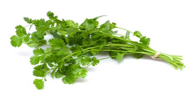 coriander in hindi