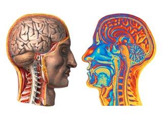 जानें कैसे सीखता और भूल जाता है हमारा दिमाग