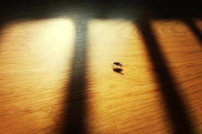 मक्खियां आपके घर से दूर ही भली