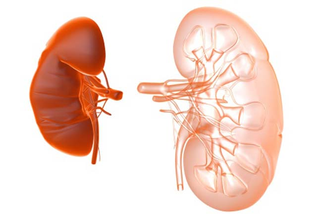 Natural Kidney Cleanse