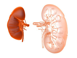 7 Best Herbs for Kidney Cleansing