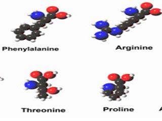 एमिनो एसिड से जुड़े थ्रेओनीन युक्त 7 प्रमुख आहार
