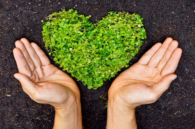 पर्यावरण अनुकूल वस्तुओं को आजमायें