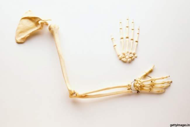 हाथ और पैरों में होती हैं शरीर की आधी से ज्यादा हड्डियां