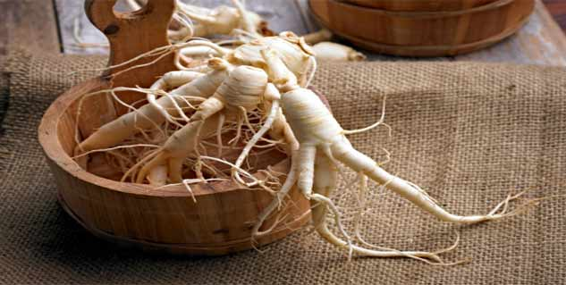 use ginseng for weight loss in Telugu