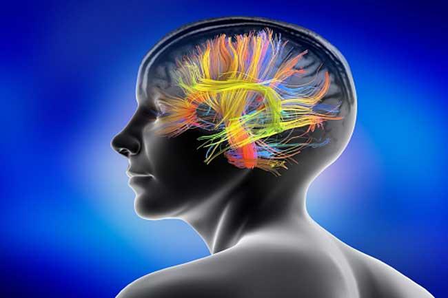 दिमाग के लिए फायदेमंद