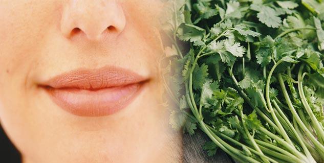 green coriander for lips in hindi
