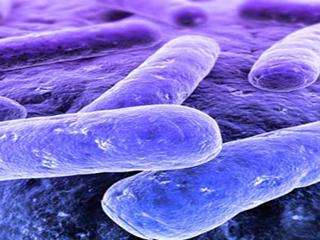 जानिए क्या है टोक्सोप्लाजमोसिस