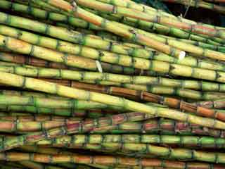 Why sugarcane juice should be your body's favourite drink