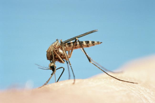 फलों और मिंट की सुगंध से दूर कर सकते हैं मच्छर