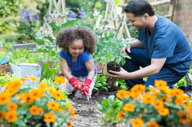 Establish an organic garden