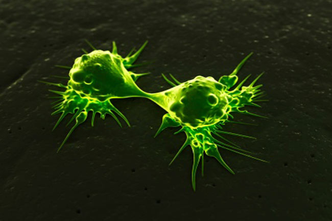 Various shapes of cancer cells