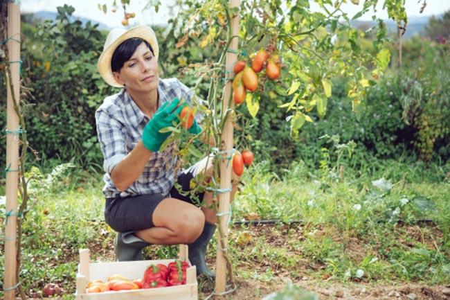 किचन गार्डन के फायदे