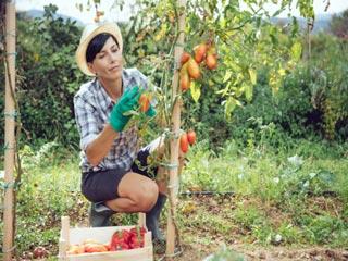 4 कारणों से जानें घर में क्यों जरूरी है किचन गार्डन