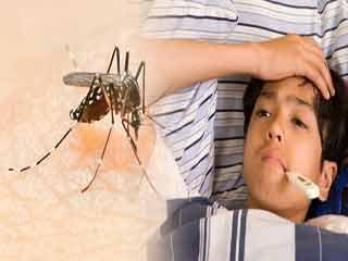 डेंगू बुखार ले सकता है जान