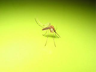 डेंगू से बचने के तरीके