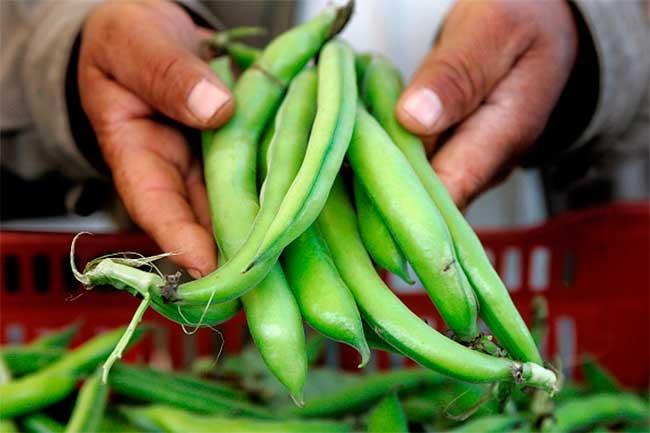 फावा बीन्स अर्थात बाकला के फायदे