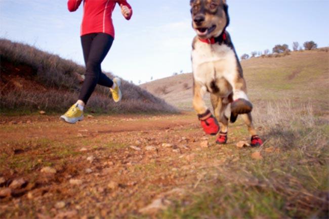 पहले अपने कुत्ते के डॉक्टर से मिल लें