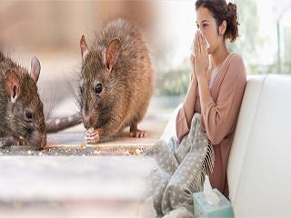 पशुओं से होने वाली बीमारी लैप्टोस्पायरोसिस के बारे में सबकुछ जानें
