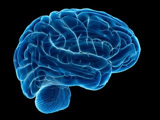 इस न्यूरान की मदद से मस्तिष्क लेता है जोखिम भरा फैसला