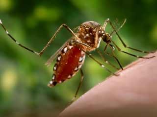 डेंगू कर देता है मरीजों की हृदयगति में बदलाव