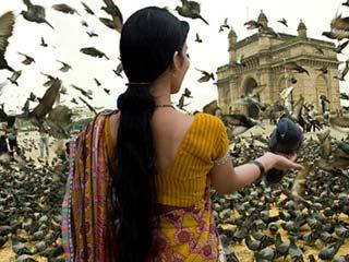 बीमारियों को दावत देना है कबूतरों को दाना खिलाना