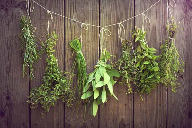Herbs for your Daily Needs
