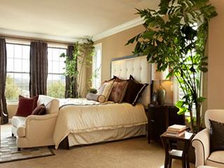 इन 6 पौधों को घर में लगाएं, सुकून भरी नींद पाएं!