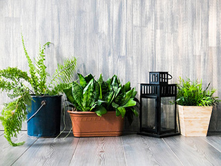 कहीं ये पौधे तो नहीं आपके घर की बीमारियों का कारण
