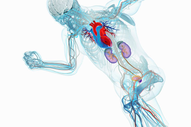 दिल और हड्डियां बनाता है मजबूत