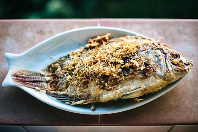 टाइलफिश और ट्यूना मछली -