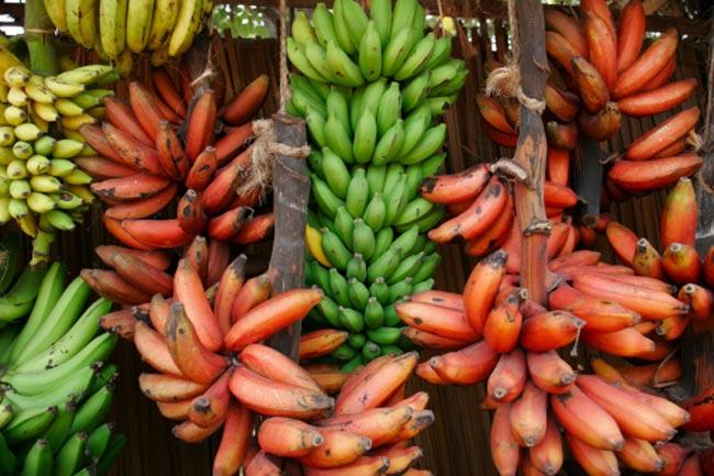 लाल केला खाने के अद्भुत स्वास्थ्य लाभ