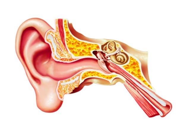 कान को होता है सबसे ज्यादा नुकसान