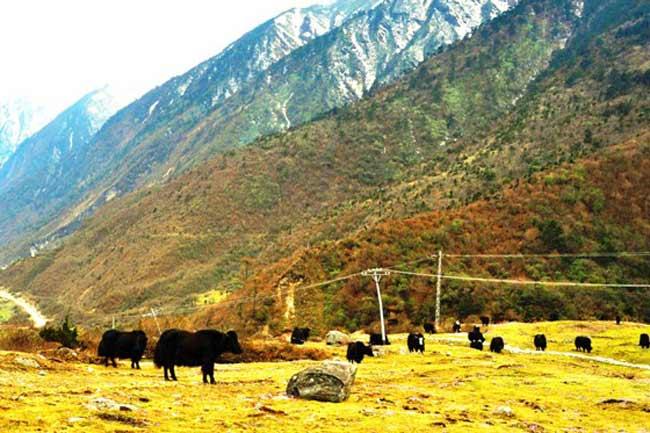 सिक्किम की युमथंग घाटी