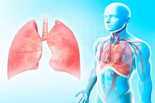 श्वसन प्रणाली