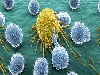 इस एंटीबॉडी से आसानी से मर जाएंगे कैंसर सेल्स